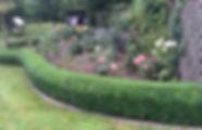 Box Hedge Shaping.jpg