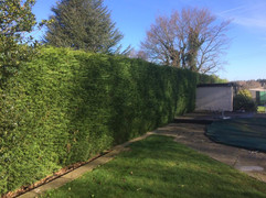 Hedge Reduction West Malling.jpg