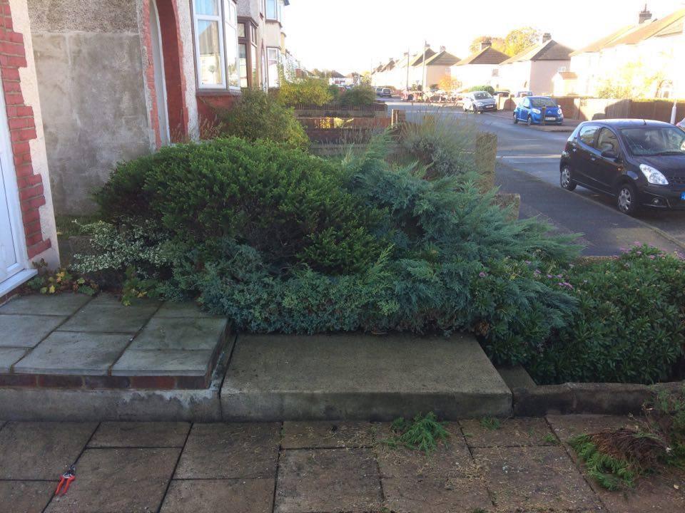 Garden Planting 3.jpg