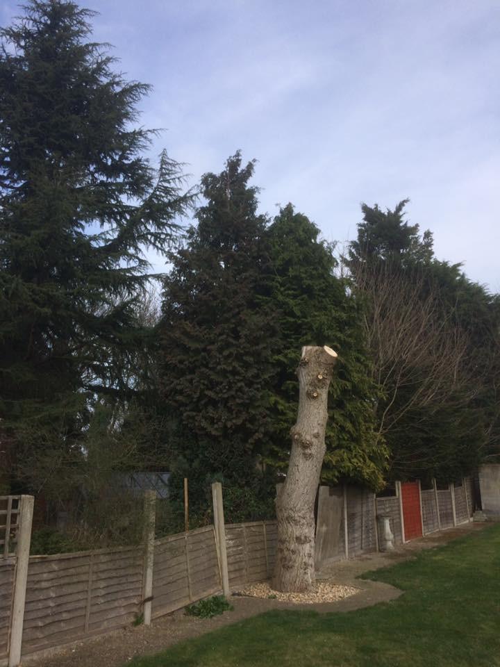 Tree Reduction Maidstone 2.jpg