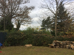 Completed Tree Removal
