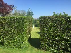 Hedge Cutting Company
