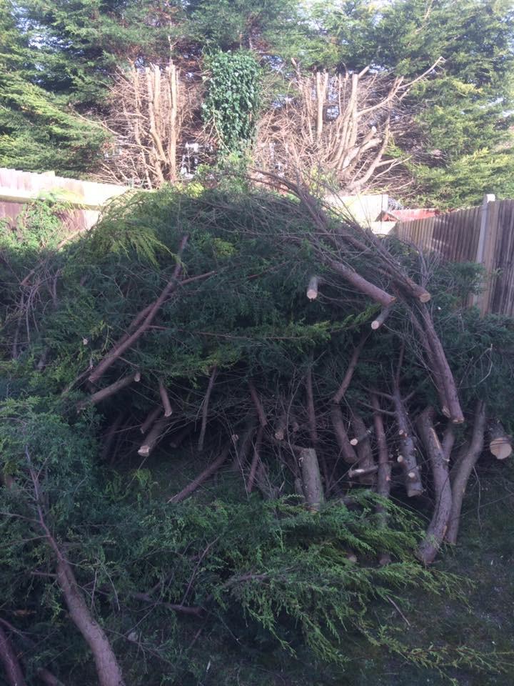 Fir Tree During.jpg