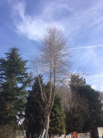 Tree Reduction in Maidstone.jpg