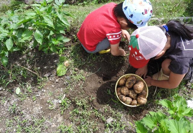 田・畑作業の体験