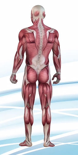 Muscle and joint pain Birmingham
