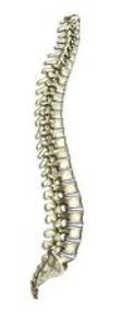 Back Pain Treatment Solihull and Warwickshire