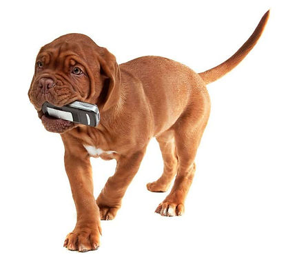 Dog with a phone