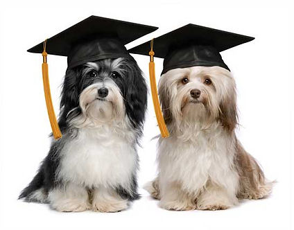 Two dogs wearing mortar boards