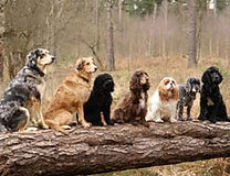 services_puppy.jpg