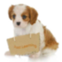 A puppy with a Just Learning sign around it's neck