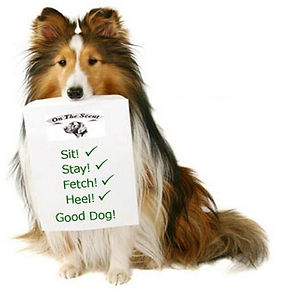 Rough Collie Dog with List