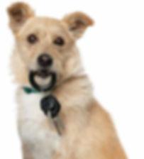 Dog holding keys