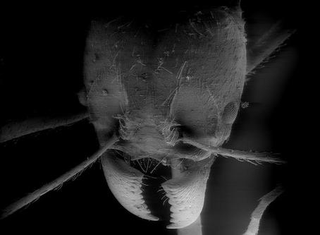 Carpenter Ant Season Starts!