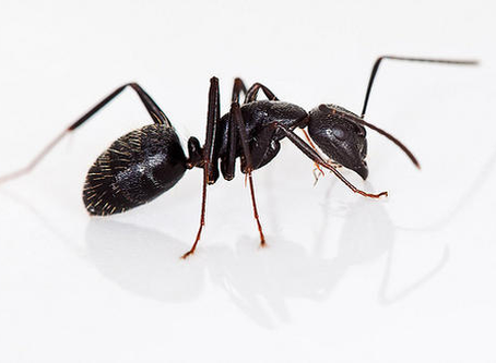 "Pests in Season (The Original ""Occupy Portland""?):"