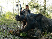 Охота в Майами, Флорида.jpg