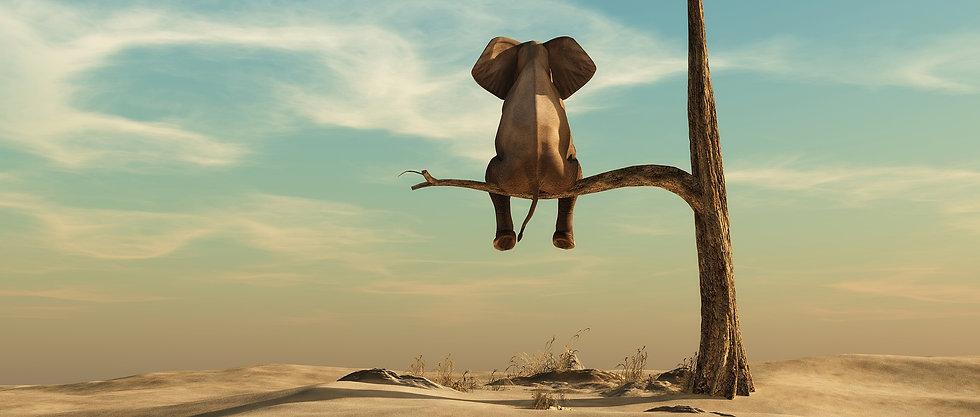 elephant branch.jpg