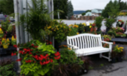 Container Garden.jpg