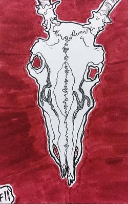 skully boi