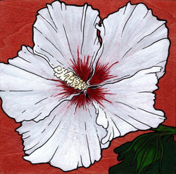 Hibiscus Mini