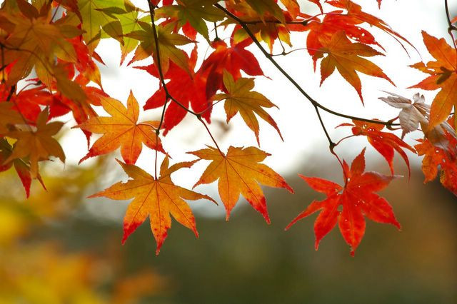 Fall Programs at the West End Community Center