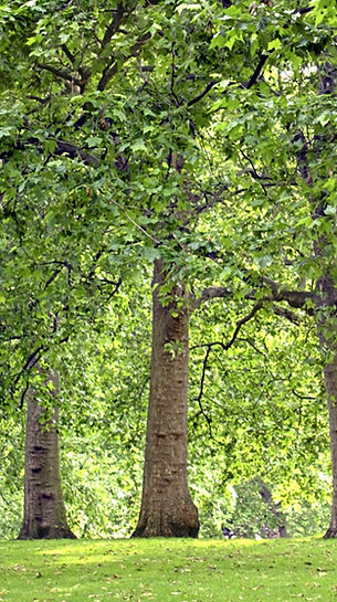 緑豊かな森林の写真