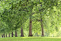 Image of green trees