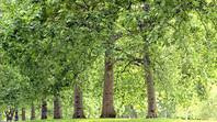 Unser Beitrag zum Umweltschutz (1)