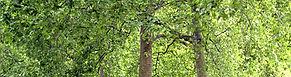 Park, stromy, alej, dřeviny, péče o dřeviny, ošetření stromů, výsadba stromů, arboristika, inventarizace, zdravotní a bezpečnostní ořezy