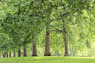 綠樹成蔭的公園