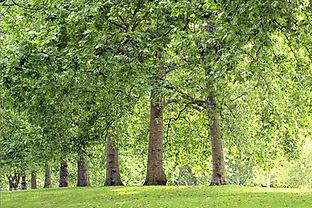 Baumallee im Park