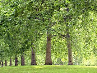 PrintReleaf Plants 500,000th standard tree