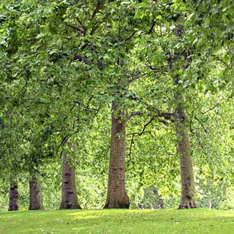 Natura-insegna: le 5 lezioni dell'albero