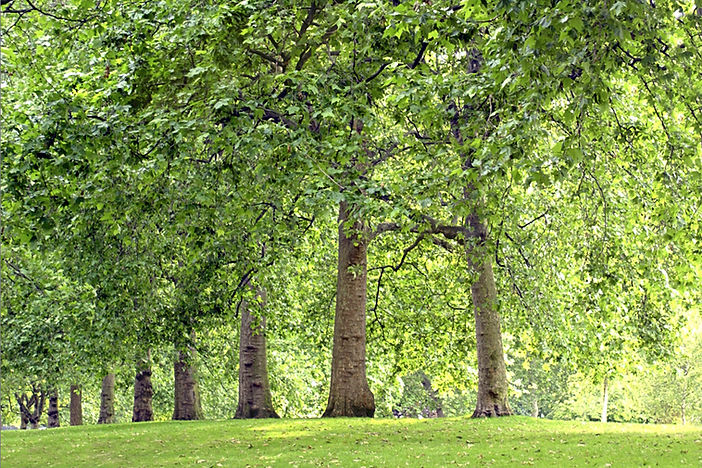 trees behind PAALS dog