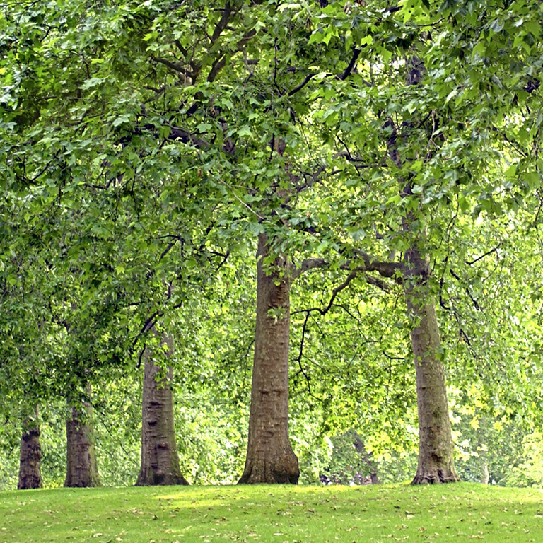 Un árbol para nuestro Planeta
