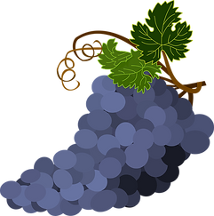 bunch-of-grapes-1300662_960_720.webp