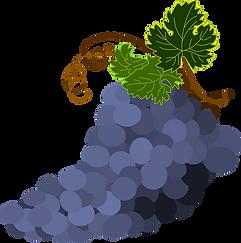 bunch-of-grapes-1300662_960_720.webp