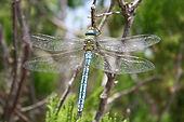 dragonfly-1529481_640.jpg
