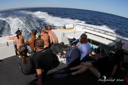 澳洲西部-潛水自駕遊-WEBWC-088.jpg