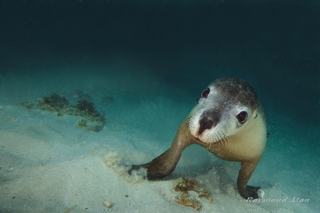 澳洲西部-潛水自駕遊-WEBWC-067.jpg
