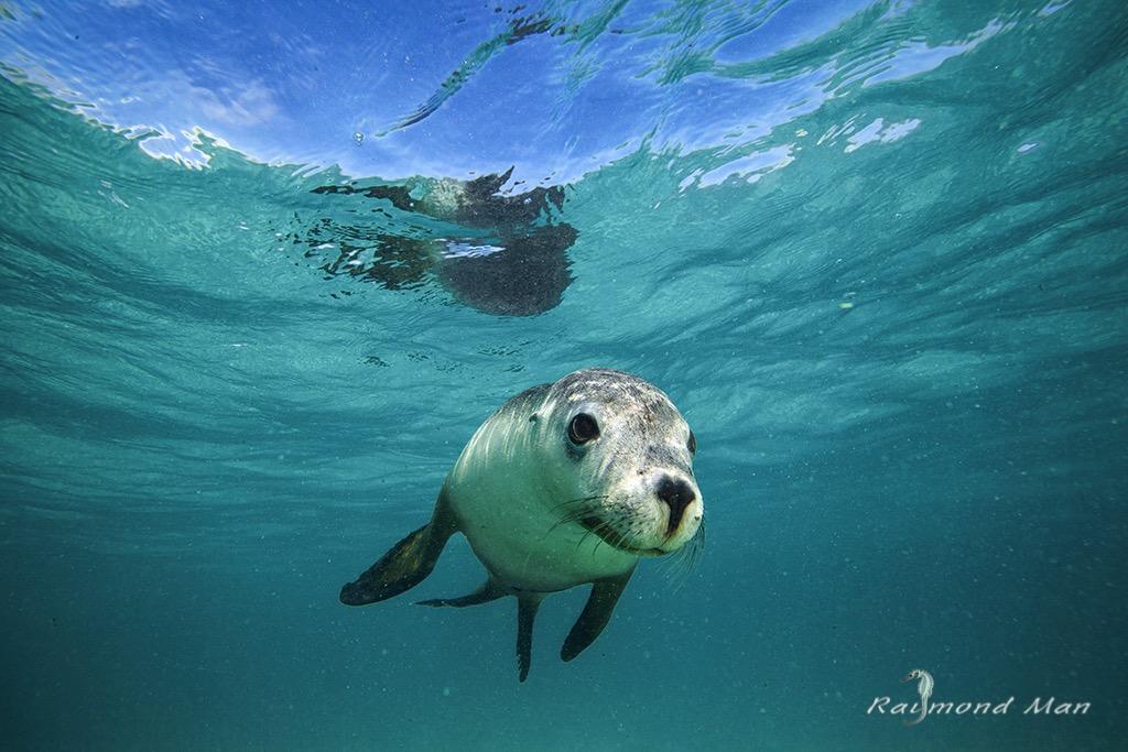 澳洲西部-潛水自駕遊-WEBWC-069.jpg