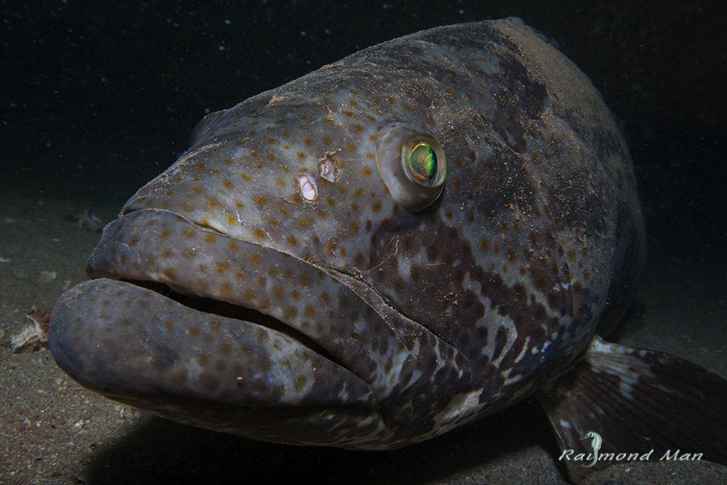 澳洲西部-潛水自駕遊-WEBWC-073.jpg