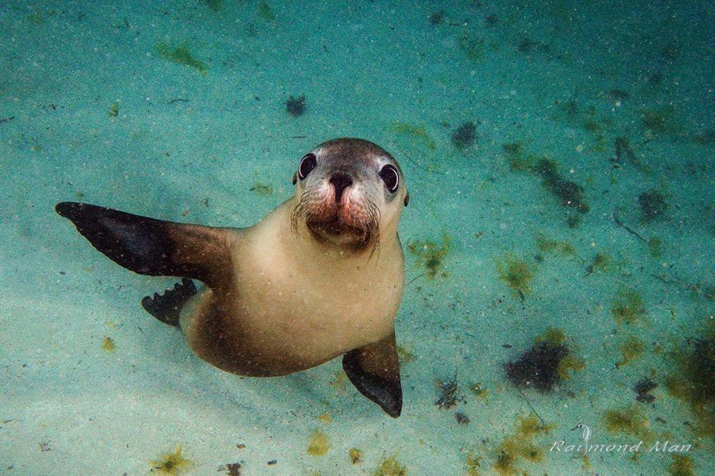 澳洲西部-潛水自駕遊-WEBWC-068.jpg