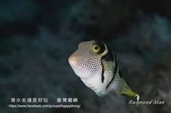 蘭嶼,臺灣 ORCHID ISLAND, TAIWAN-16