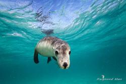 澳洲西部-潛水自駕遊-WEBWC-061.jpg