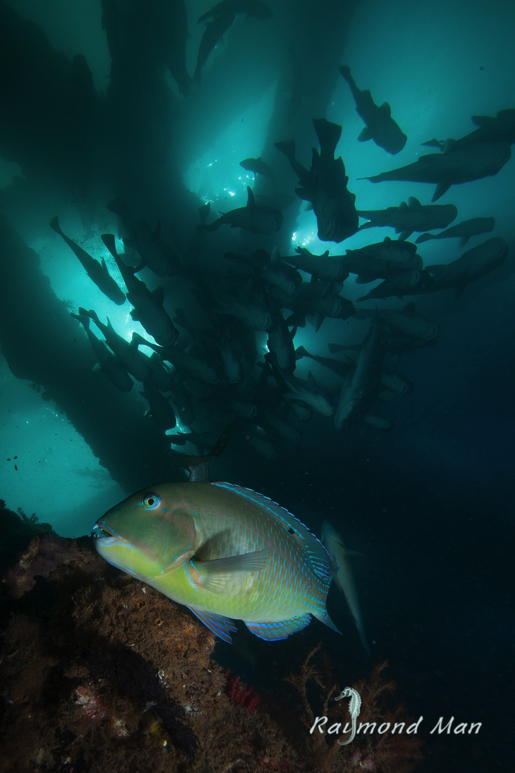澳洲西部-潛水自駕遊-WEBWC-072.jpg