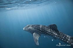 澳洲西部-潛水自駕遊-WEBWC-063.jpg