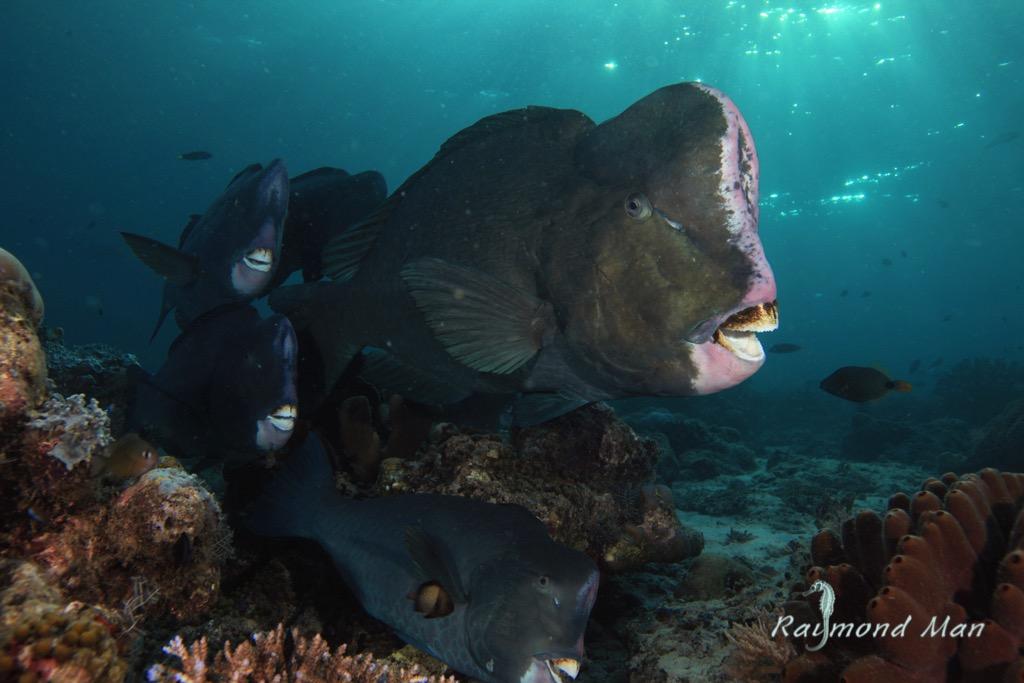 Amazing Marine Life