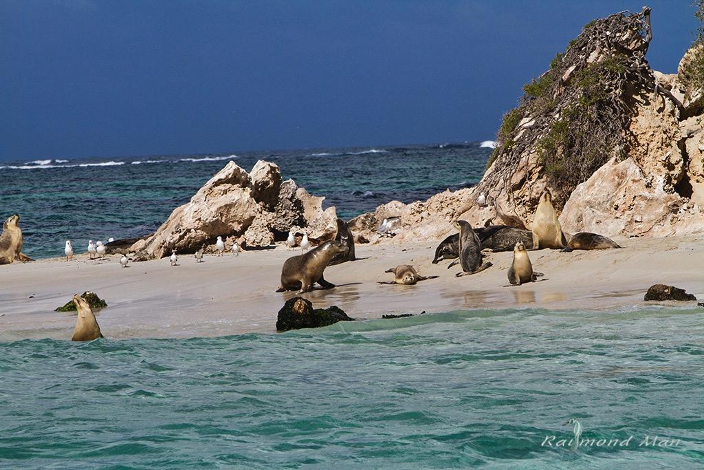 澳洲西部-潛水自駕遊-WEBWC-066.jpg