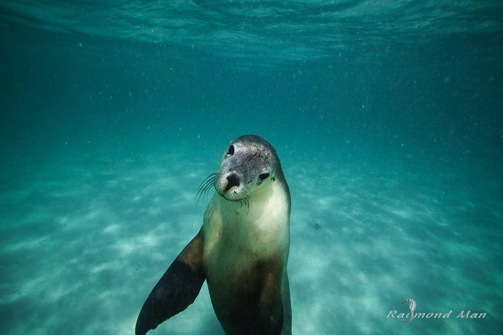 澳洲西部-潛水自駕遊-WEBWC-070.jpg